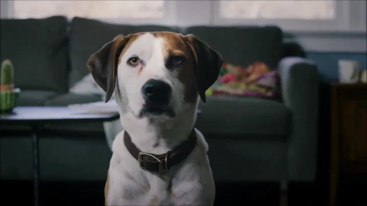 martin downward dog